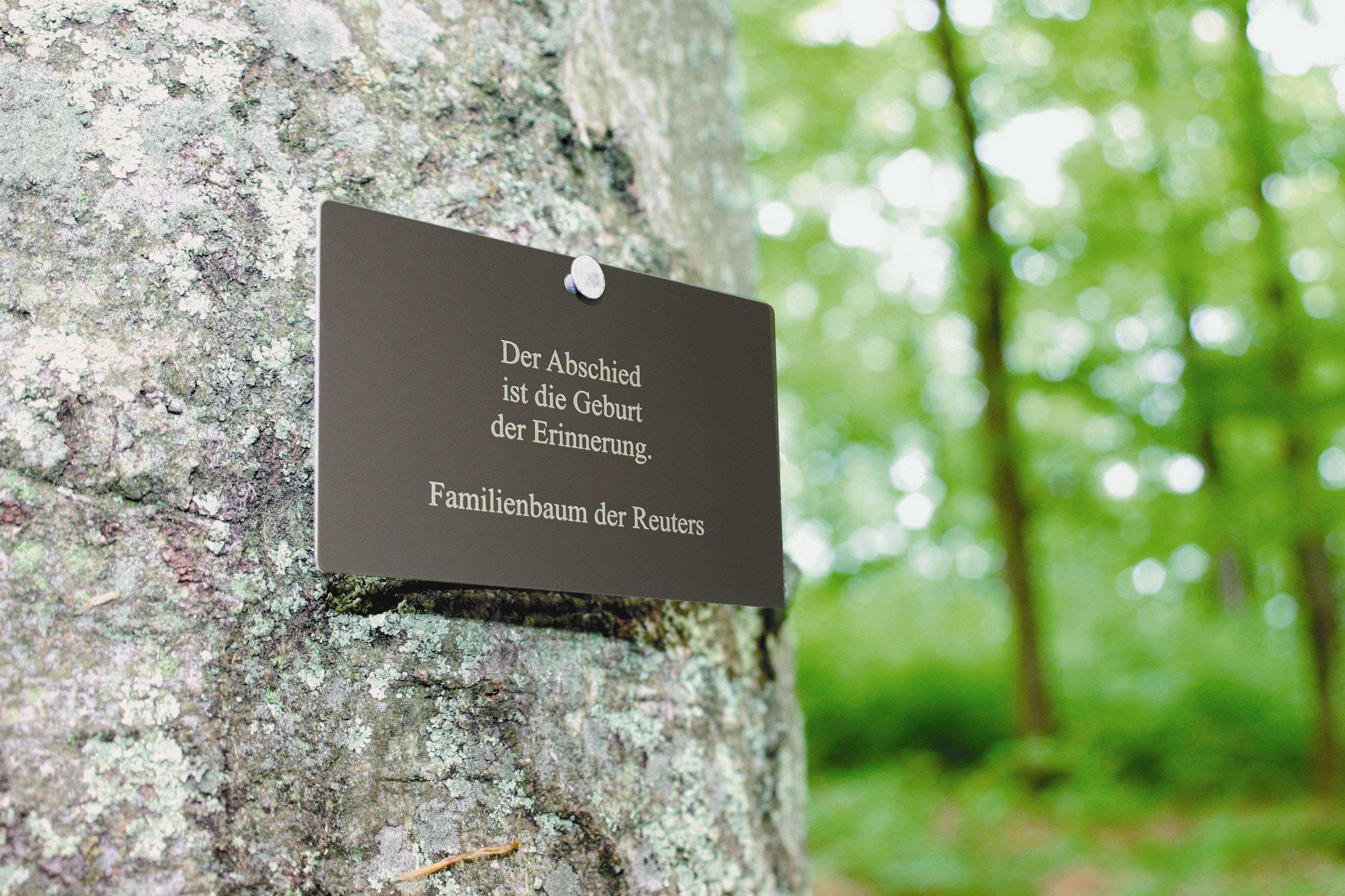 Friedwald Informationen Zur Baumbestattung Im Friedwald